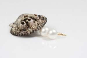 Pearl earring and a shell - freshwater vs. saltwater pearls